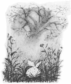 ежик в тумане с узелком фото